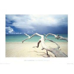 Plaża, Morska woda - reprodukcja