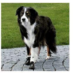 Walker Active - Ochronne buty dla psa - różne rozmiary Rozmiar:L