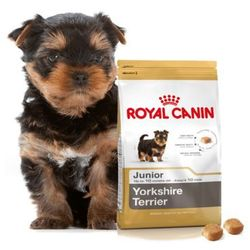 ROYAL CANIN YORKSHIRE TERRIER JUNIOR - 500G + 500G GRATIS!