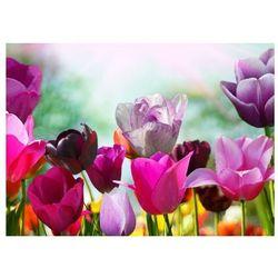 Piękne wiosenne kwiaty - fototapeta