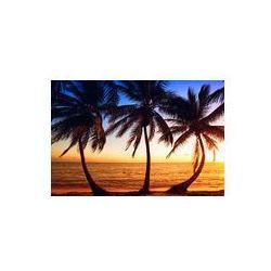 Foto naklejka samoprzylepna 100 x 100 cm - Tropic sunrise przez palmy kokosowe