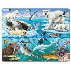 Zwierzęta Arktyki