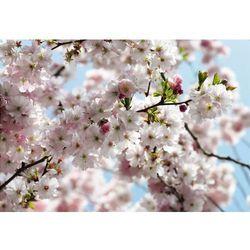 Fototapeta KOMAR 8-507 Spring National Geographic
