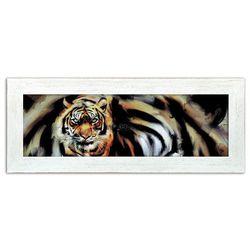 Tygrys, Glamour