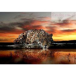 Fototapeta JAGUAR 126VE Tygrys