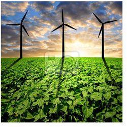 Obraz Pole słoneczników z turbin wiatrowych