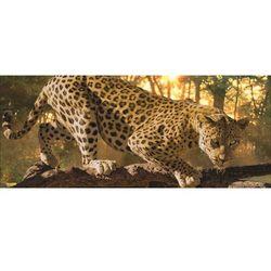 Fototapeta Panoramiczna Jaguar 242VEP Bezpłatna wysyłka kurierem od 300 zł! Darmowy odbiór osobisty w Krakowie.