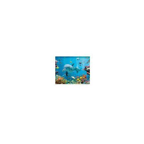 Delfin Rafa Koralowa Plakat